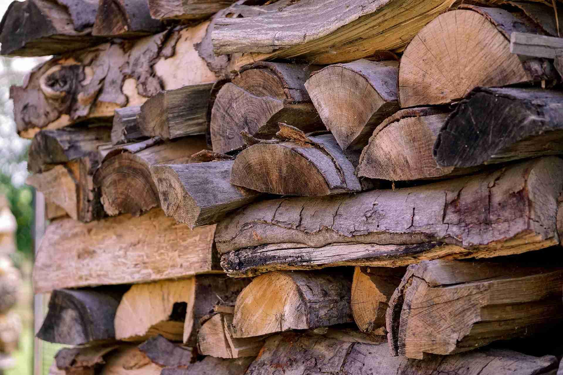 drevo stechovice